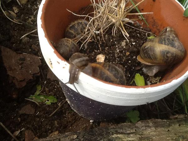 culture des escargots !